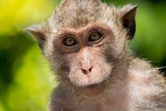 Małpi portret Fotografia Stock
