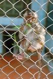 małpi smutny Zdjęcia Stock