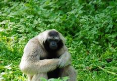 małpi Thailand obrazy stock