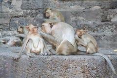 małpi Thailand Zdjęcia Stock