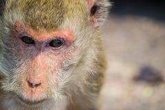 małpi zadumany Fotografia Stock