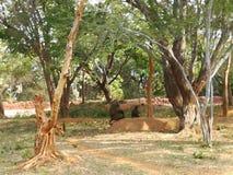 Małpi zoo zabawy masti zdjęcie royalty free