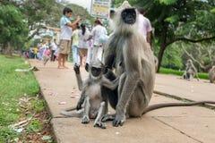 Małpia mama i syn Obraz Royalty Free
