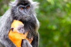 Małpia matka i dziecko Zdjęcia Royalty Free