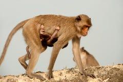 Małpia matka i syn. Zdjęcia Royalty Free
