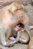 Małpia rodzina Zdjęcie Stock