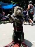 Małpie akrobacje Obraz Royalty Free