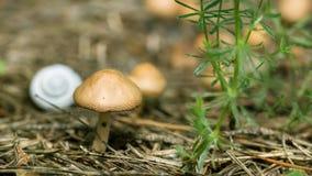 Mała pieczarka w lesie, Obrazy Royalty Free