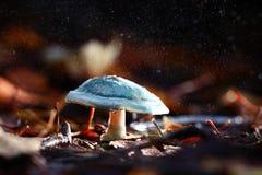 Mała pieczarka w magicznym lesie Zdjęcie Royalty Free