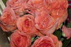 ma piekne róże obrazy royalty free