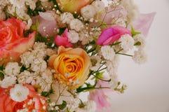 ma piekne róże Fotografia Royalty Free