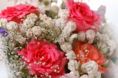 ma piekne róże Zdjęcie Royalty Free