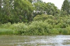 Mała prosta rzeka Fotografia Royalty Free