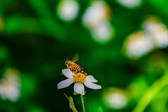 ma?a pszczo?y dziewczyna kostiumowa lataj?ca zdjęcia stock