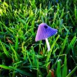 Mała purpury pieczarka Zdjęcia Royalty Free