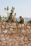 małpy Fotografia Royalty Free