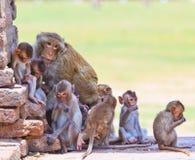 Małpy Zdjęcia Royalty Free