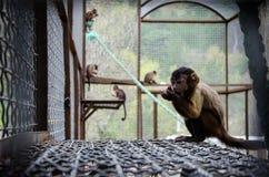 Małpy Obraz Stock