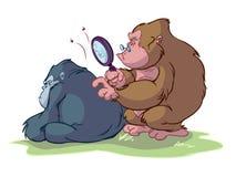 małpy inny target831_0_ inny Fotografia Stock