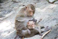 Małpy matka i dziecko Fotografia Royalty Free