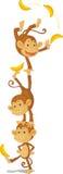 małpy trzy Obraz Stock