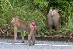Małpy w lesie Obrazy Stock