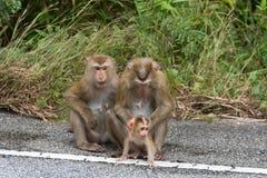 Małpy w lesie Obraz Stock