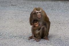 Małpy w lesie Obrazy Royalty Free