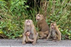 Małpy w lesie Zdjęcia Stock