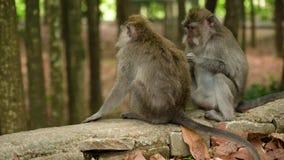 Ma?py w lesie w Bali zbiory wideo