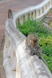 Małpy w naturze zdjęcia stock