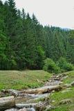 Mała rzeka Zdjęcie Stock