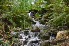 Mała rzeka W lesie Fotografia Royalty Free