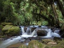 Mała rzeka w lesie Obrazy Stock