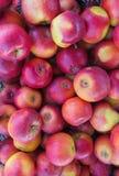 Ma??s vermelhas org?nicas frescas em uma grande caixa de madeira, fim acima, fundo foto de stock royalty free