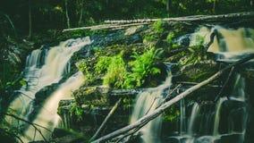 Mała siklawa w zielonym lesie Zdjęcie Royalty Free