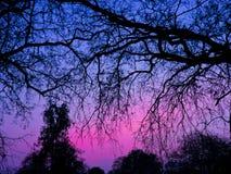 ma swoje korzenie drzewa zdjęcia stock