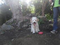 Ma transitoire de chien prenant une La Muela Quetzaltenango de Cerro de coupure photos libres de droits