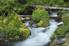 mała wodospadu Zdjęcia Stock