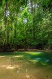 Mały basen w tropikalnym tropikalnym lesie deszczowym Fotografia Royalty Free