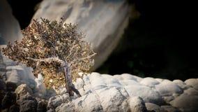 mały bonsai drzewo Fotografia Royalty Free