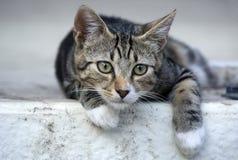 Mały cat-1 Fotografia Royalty Free