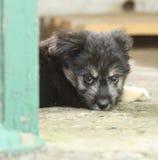 Mały czarny bezdomny szczeniak Zdjęcia Royalty Free