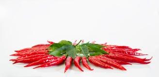 Mały czerwony chili obrazy stock