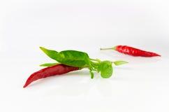 Mały czerwony chili obrazy royalty free