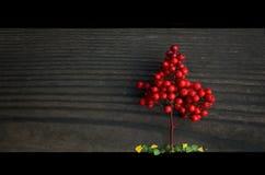 Mały czerwony drzewo Obrazy Royalty Free