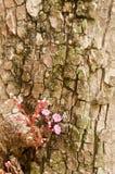 Mały czerwony gwiazdowej owoc kwiat Obrazy Stock
