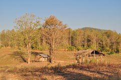 Mały dom w kraju Zdjęcie Royalty Free