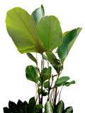 Mały drzewny wizerunek Zdjęcie Stock