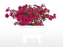 Mały drzewny wizerunek, graficzna pracy powierzchnia Zdjęcie Stock